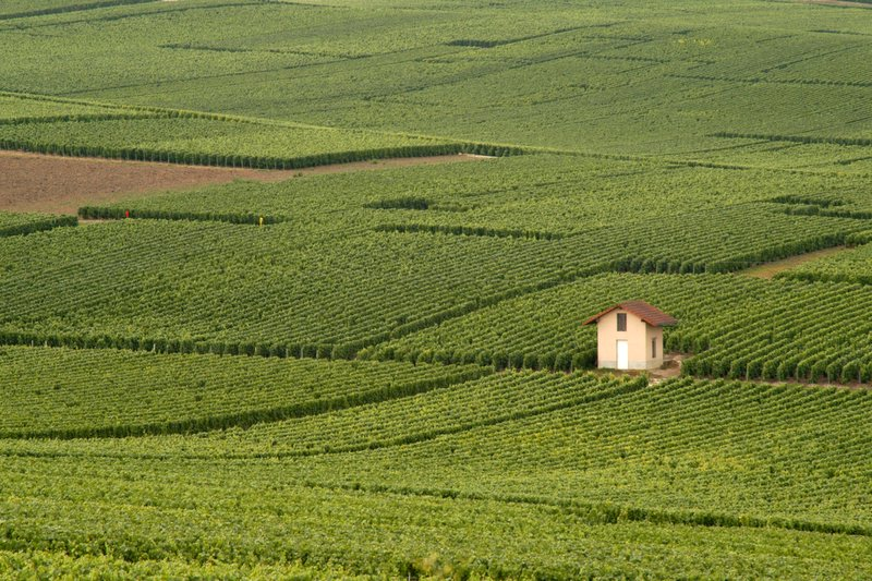 Vineyards of France