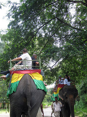 Travel Adventures for the Whole Family - Elephant Riding in Srilanka