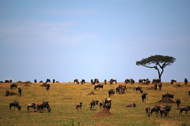 The Maasai Mara National Reserve