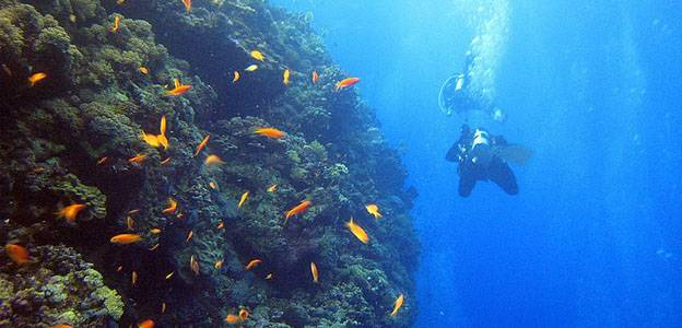 egyptian-red-sea-scuba-diving