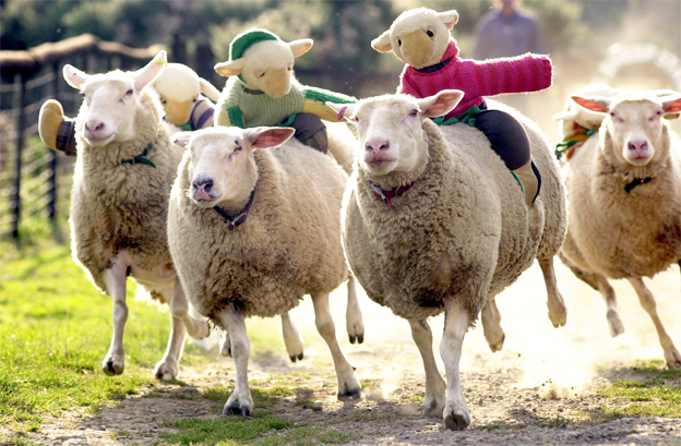 the-big-sheep-race-devon