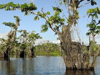 cuyabeno-wildlife-reserve-ecuador