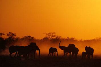 destination-namibia-safari