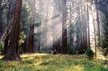 destinations-Sequoia-and-Kings-Canyon-National-Park
