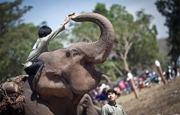 lao-elephant-festival
