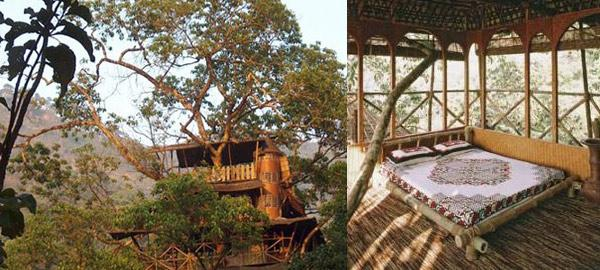 Amazing Treehouse Hotels in India