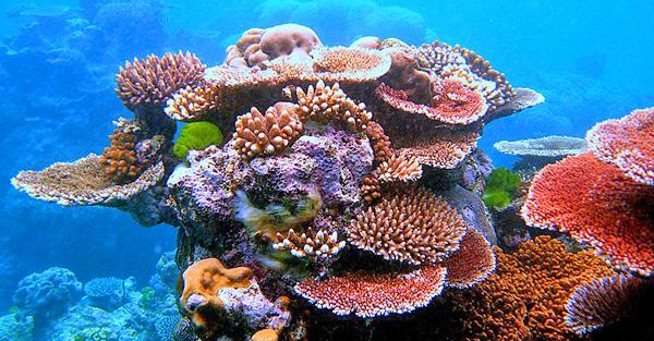 most beautiful place on earth - The Great Barrier Reef, Australia