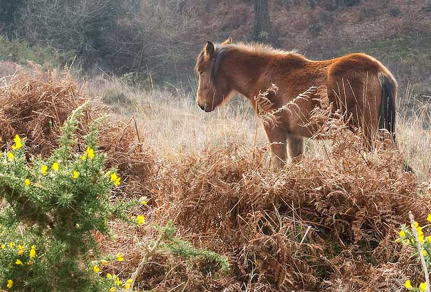 Holiday Destinations for Horse Lovers - New Forest, UK