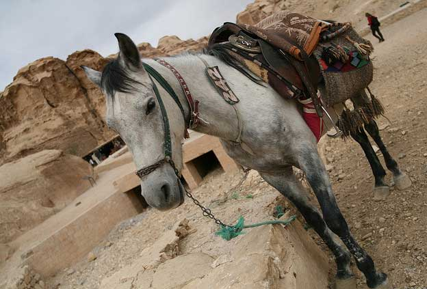 Holiday Destinations for Horse Lovers - Petra, Jordan