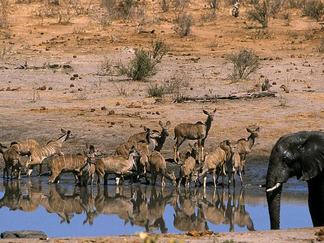 Travel to Africa for the wild life
