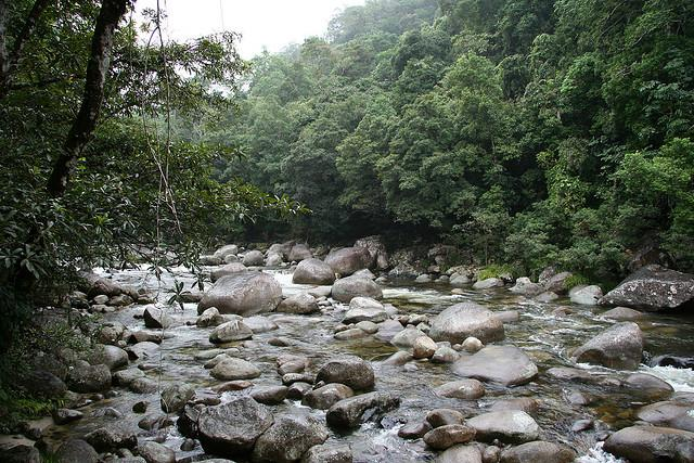 Daintree Rainforest in Australia