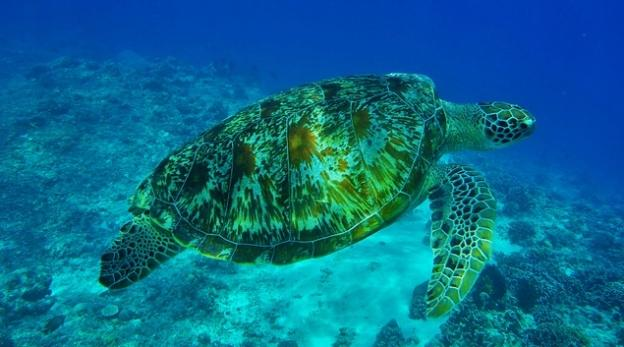 Scuba Diving Locations For Beginners - Indonesia Turtle