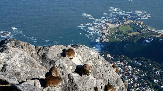 Destinations For Volunteering Abroad - South Africa