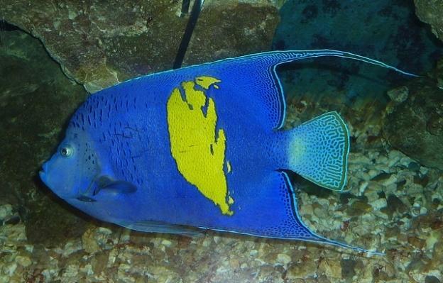 Scuba Diving Locations For Beginners - Arabian Angelfish Hurghada