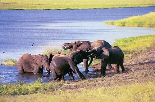 Safari Destinations - Elephants