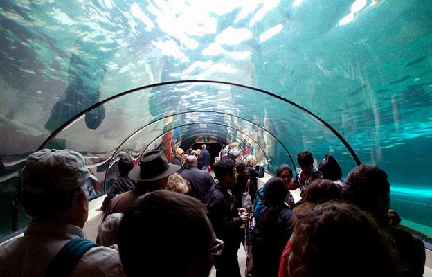 Sydney Aquarium in Sydney City