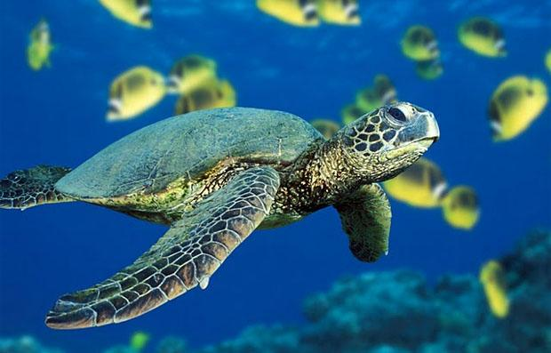 Saving Sea Turtles in Dubai