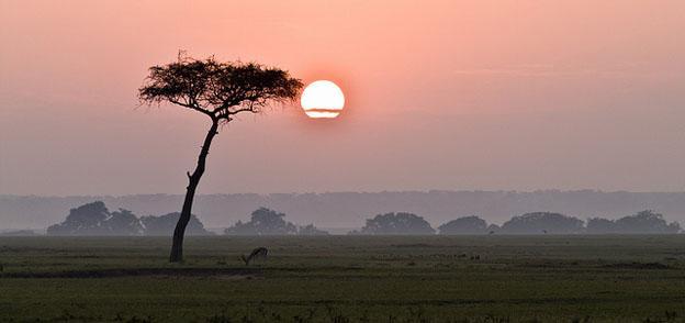 Maasai Mara In Kenya