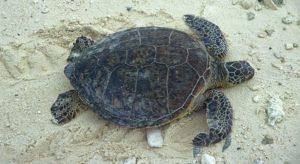 Students on a Real Adventure with the Green Sea Turtles