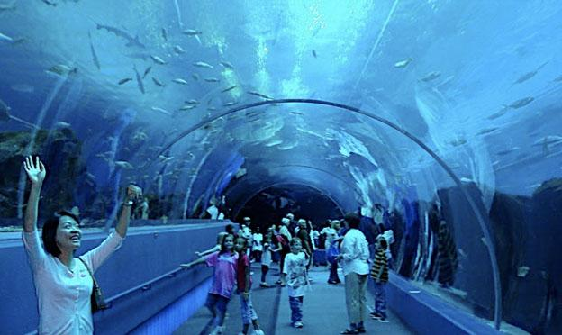 The Georgia Aquarium at Atlanta City