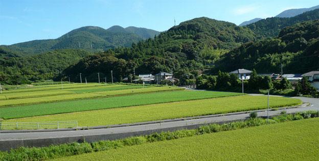 Temples Pilgrimage of Shikoku