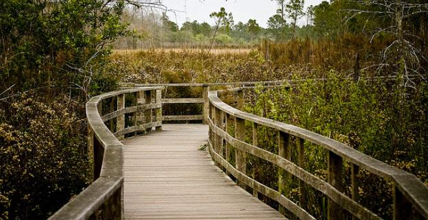 Things To Do On Vacation In Florida - Corkscrew Swamp Sanctuary
