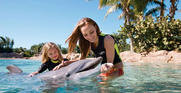 Things To Do On Vacation In Florida - Discovery Cove