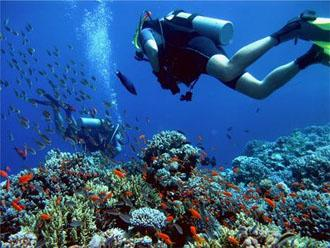 Scuba Diving in the Philippines