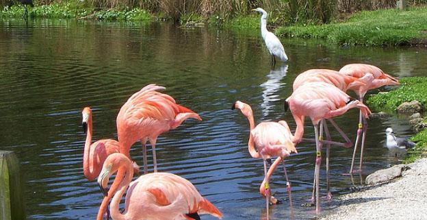 Things To Do On Vacation In Florida - Sarasota Jungle Gardens