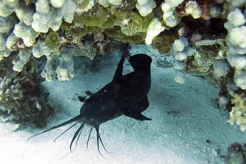 Australia Ningaloo Reef