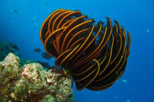Scuba Diving Australia - Osprey Reef