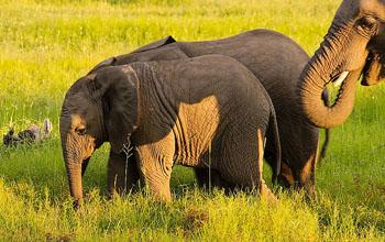 Best Africa Safari Deal Elephants