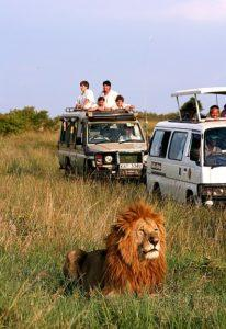 SAFARI-FAMILY-LION