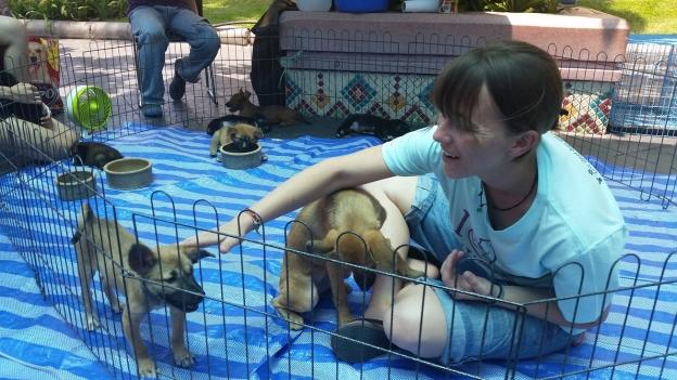 An animal shelter volunteer at puppy adoption event