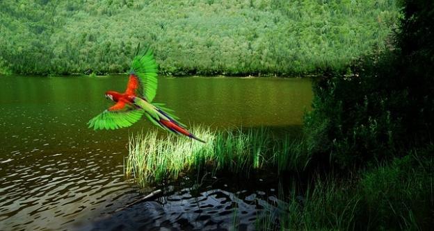 birds in Rio