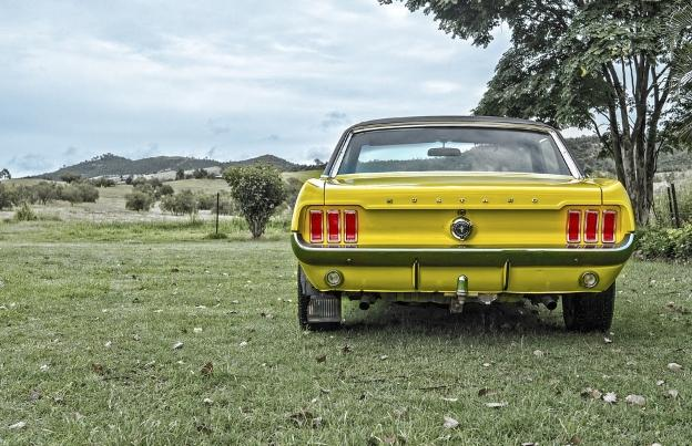 Mustang in Australian country side.